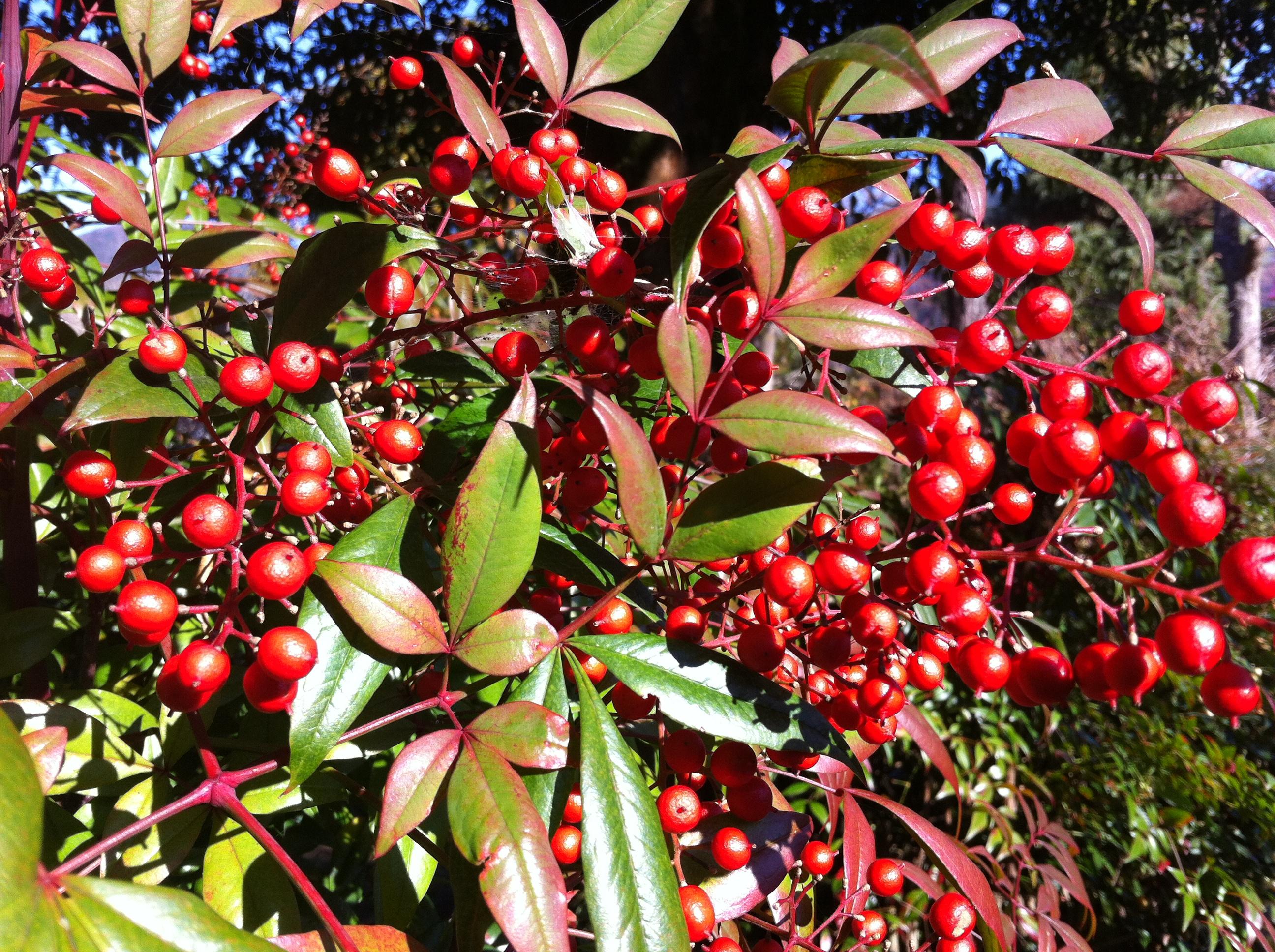 写真 2012-12-08 10 08 39.jpg